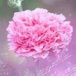 「母の日」に贈るカーネーション厳選5選